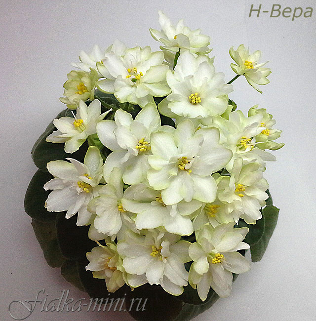 Н-ВЕРА (Н. БЕРДНИКОВА)