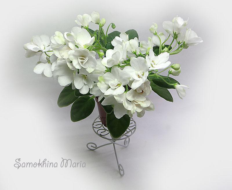 ле-невеста