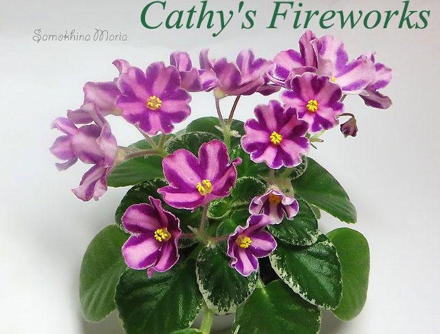 CATHY'S FIREWORKS