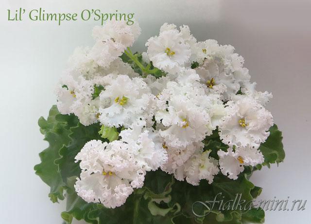 Lil' Glimpse O'Spring